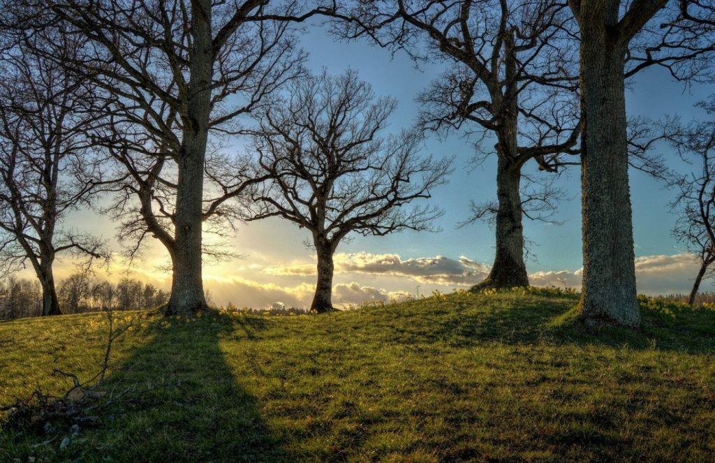 bezlistne drzewa na tle zachodzącego słońca